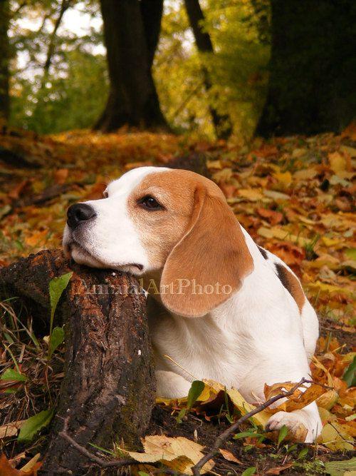 Digital Art Photo Beagle Dog in Autumn Forest JPG via Etsy