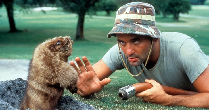Bill Murray to Open Caddyshack Restaurant in Hometown - Rolling Stone