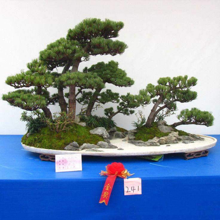 Hot 60 PZ Thunbergii Semi di Pino Nero Semi di Albero bonsai Piante In Vaso Balcone Posti A Sedere Giapponese Semi di Albero di Pino(China (Mainland))