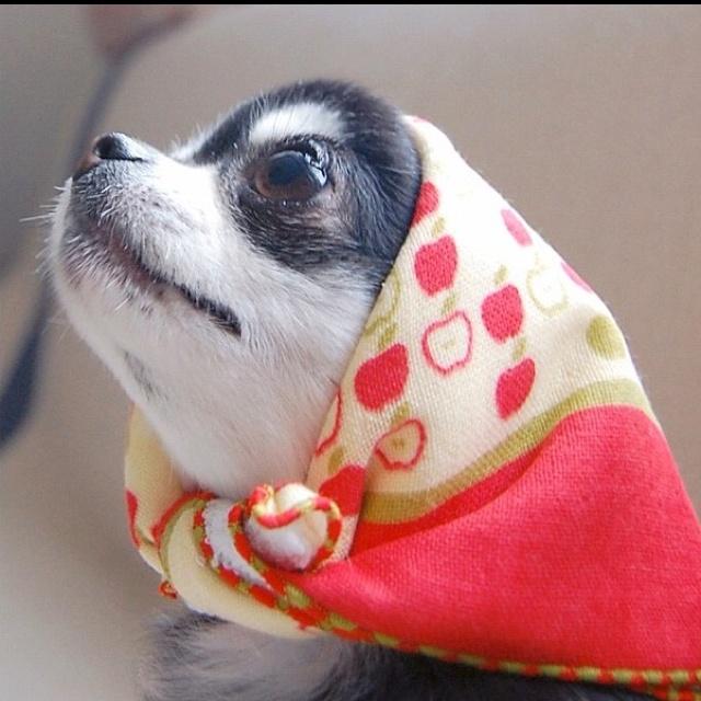Chi wearing a babushka! Cute!