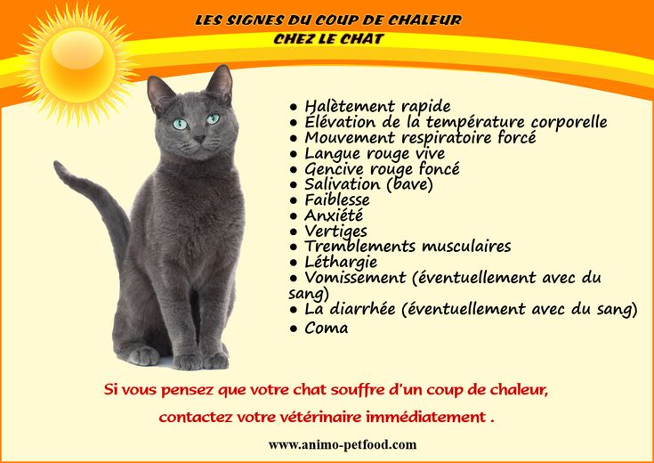 9 best waiting for you images on pinterest cutest animals adorable animals and animals dog - Coup de chaleur chat symptomes ...