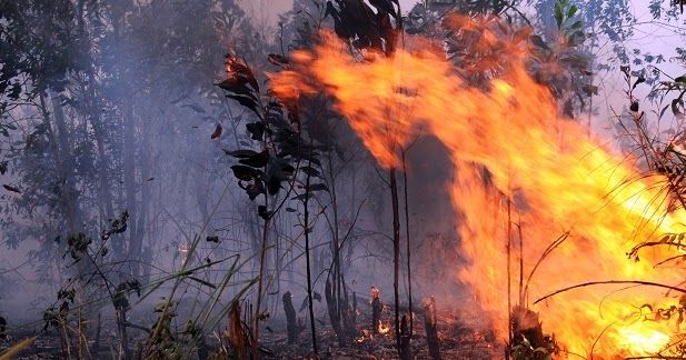 Seputar Berita Gubernur Sumatera Selatan Herman Deru Menyebut