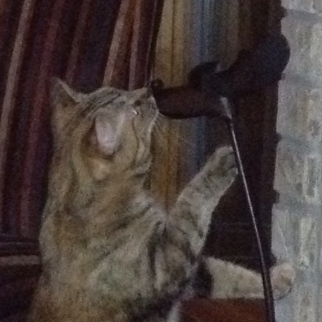 Illicit affair between my cat Charlie and my fireplace