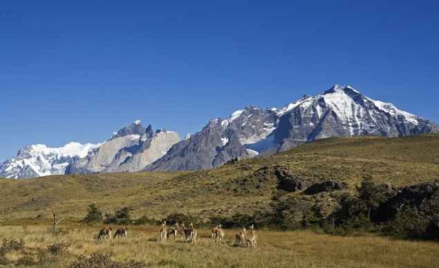 The Torres del Paine Circuit passes blue glaciers, craggy mountain peaks, granite pillars, green lagoons, and expansive ice fields—plus exotic wildlife such as ostrich-esque rheas and llama-like guanacos, above.