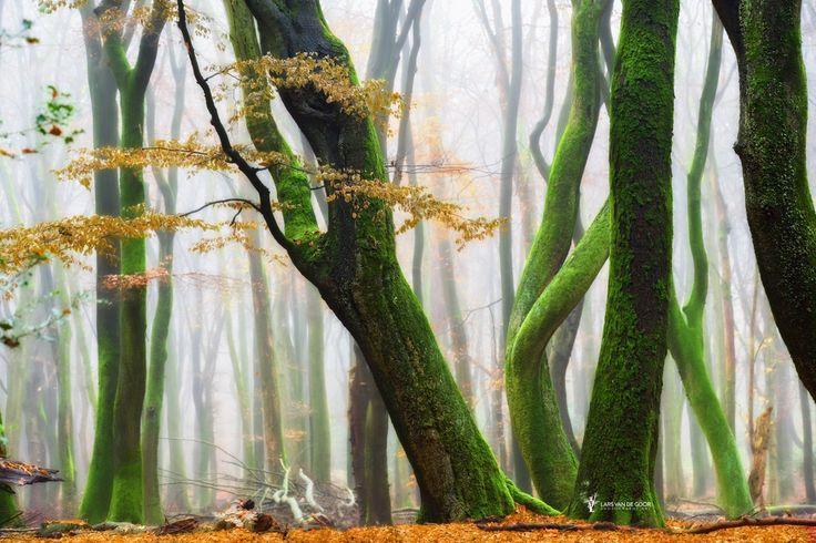 Dans în pădure