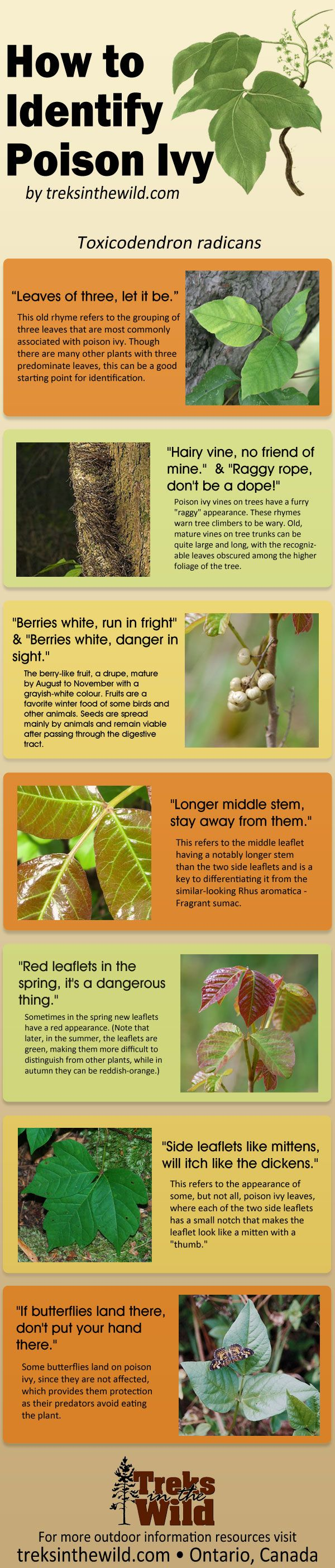 How to identify poisonous plants.  Useful when out on nature walks.
