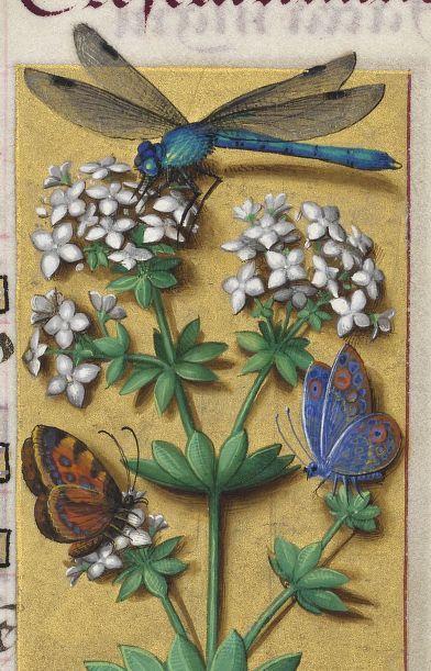 Grandes Heures d'Anne de Bretagne 1684 - 32r