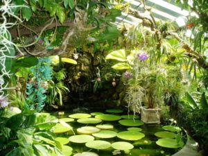 Ischia - La Mortella gardens   Italy