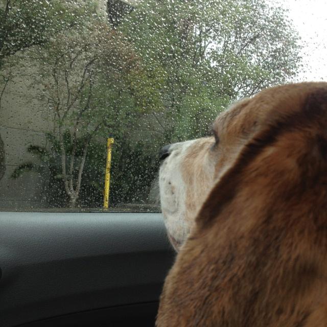 Describe tu pin... Tobias watching rain: Describ Tu, Tobias Watches, Tu Pin, Watches Rain
