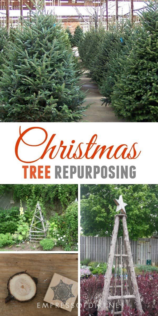 25 Creative Ways To Reuse Christmas Trees Live Christmas Trees Natural Christmas Tree Natural Christmas