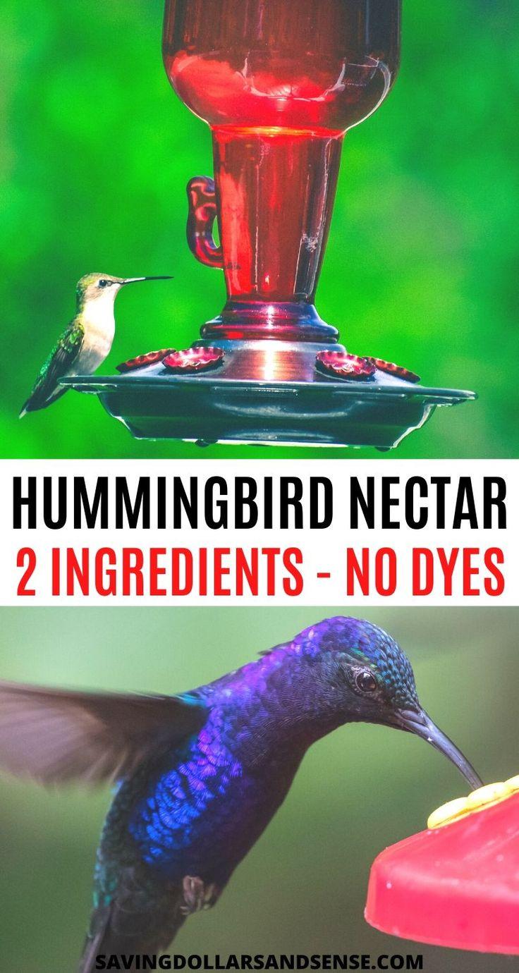 hummingbird food mixture winter