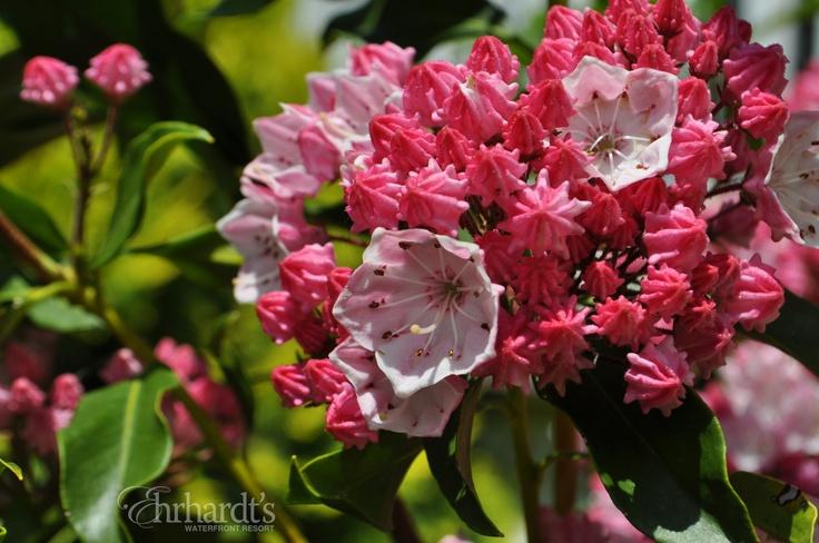 Flowers in bloom on Lake Wallenpaupack in the Poconos!