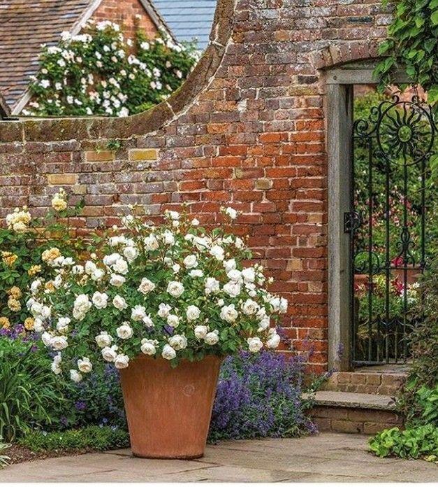 Pin By Linda Jenkins On The Country House Rose Garden Landscape Garden Shrubs David Austin Roses