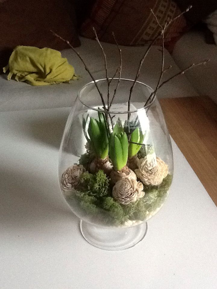 Frühlingdeko Hyazinthe Im Glas Deko Frühling