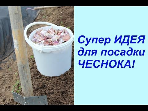 Супер ИДЕЯ для посадки ЧЕСНОКА! - YouTube