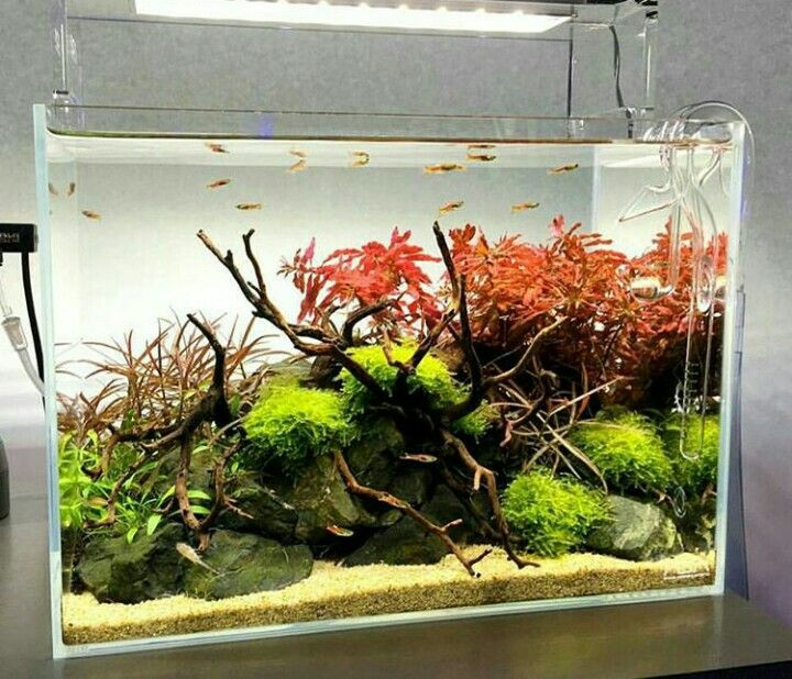 Aquascaping Magazine: 2997 Best Images About Don't Tank Me.... On Pinterest