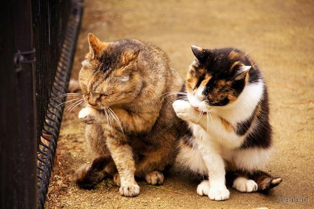 シンクロ率が270%を超えています! 猫のシンクロを堪能する画像集 sync-cat14.jpg