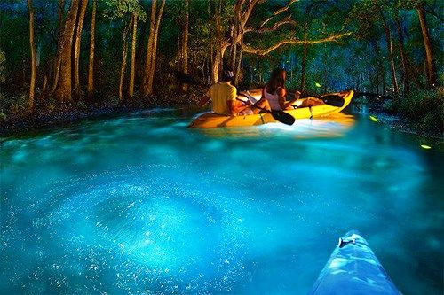Best Bioluminescent Tours Puerto Rico