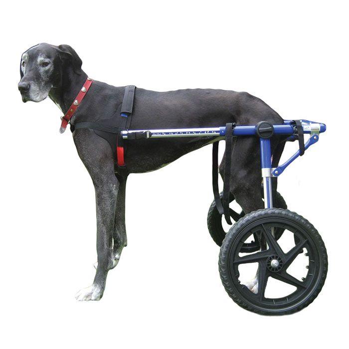 Dog Wheelchair L Air Tire Dogs 70lbs Walkin Wheels Enables