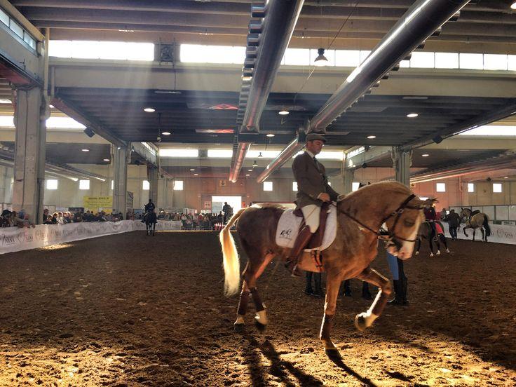 durante il weekend di novembre dal 5 al 8 si terrà la fiera cavalli Verona…