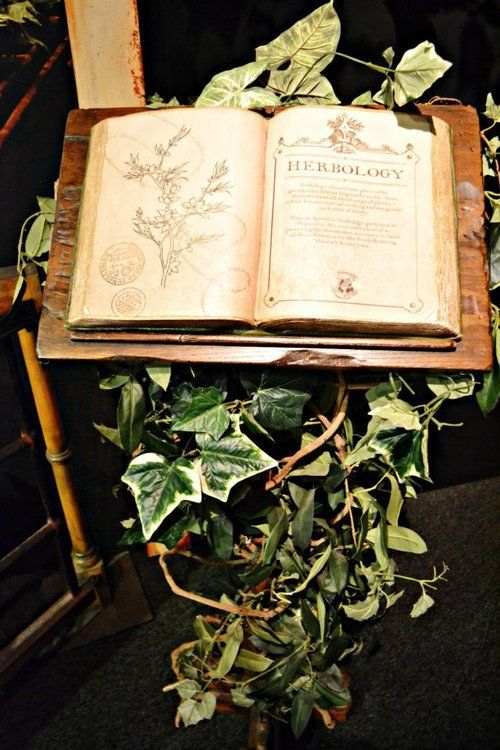 17 Best Images About Class Board Herbology On Pinterest