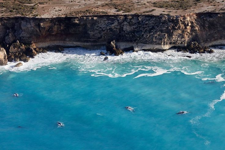 Whales in the Great Australian Bight