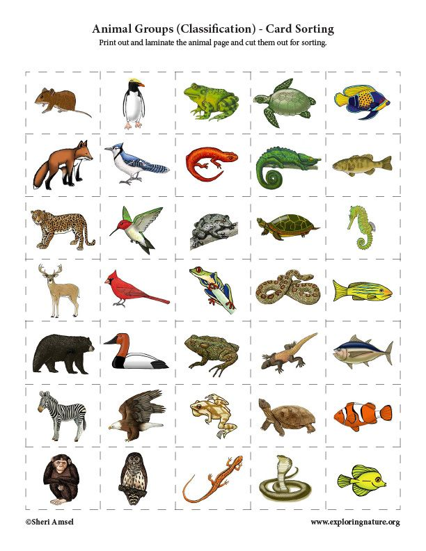 Animal Groups Classification Card Sorting Activity Animal