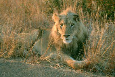TravelComments.com Blog Oficial: Parque Nacional Kruger Calendario - Abril