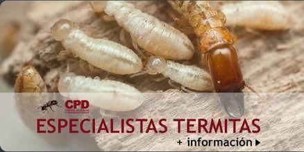 CPD Control de Plagas Valencia y Termitas Valencia