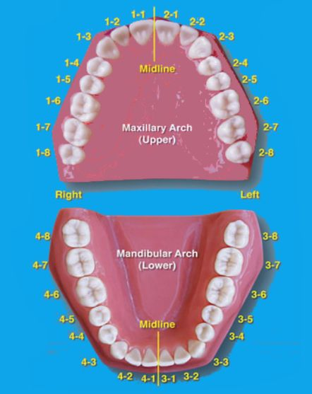 Tooth numbering system for supernumerary teeth
