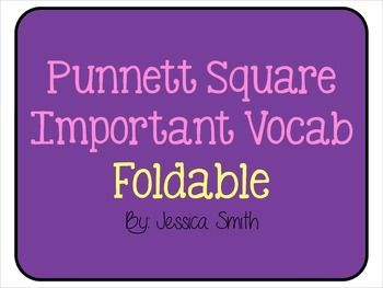 Punnett Square Important Vocabulary Foldable FREEBIE
