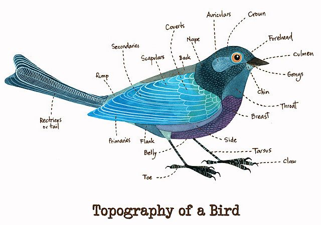 Topography of a Bird