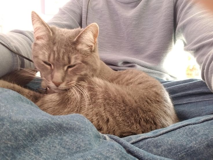 You've heard of a lap dog but here's my lap cat. https://i.redd.it/kzpf93ucbtj01.jpg