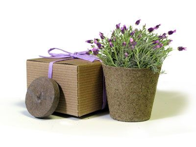 For my BFF4L's shower, we did bagged potted herbs as favors.  They brown paper bags had pretty ribbons, and the room smelled so herbaceous!  Each bag included a card with a recipe for the particular herb.