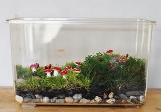 Mossterrarium: Crafts Ideas, Moss Aquarium