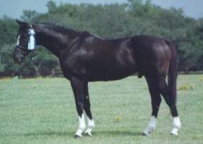 Horse Color Genetics
