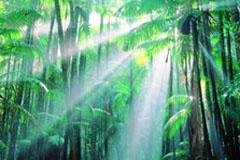 Peter LikLik Photography, Photography Favorite, Art Pets Lik, Peter O'Tool, Gorgeous Photography, Lik Photos, Peter Lik Def, Rainforests