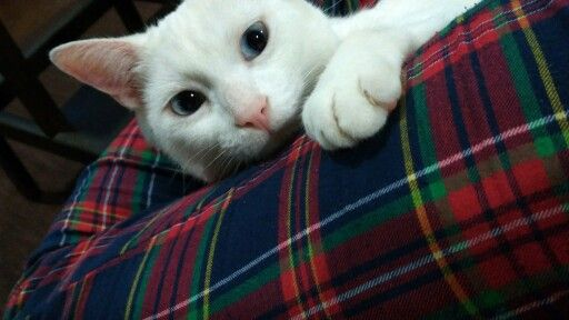 Bianco and my pijama...