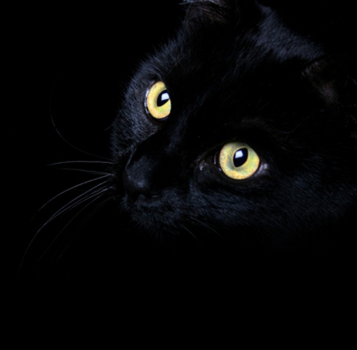 its National Black Cat day!! click to read all about it..... (I <3 black cats! They are the sweetest!)