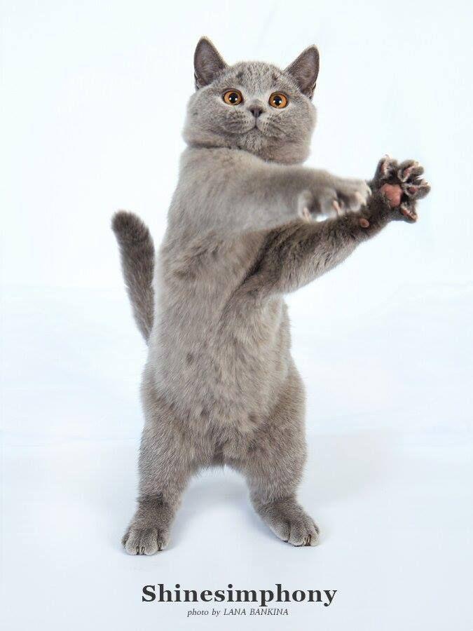 ...boogie boogie kitty...