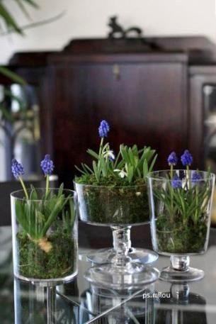 「球根植物をガラスの器に寄せ植え」 昨日の続きです。  ヒアシンスは、カップに入れなくても、 直接、水苔に包んでガラスの器に入れるだけ...
