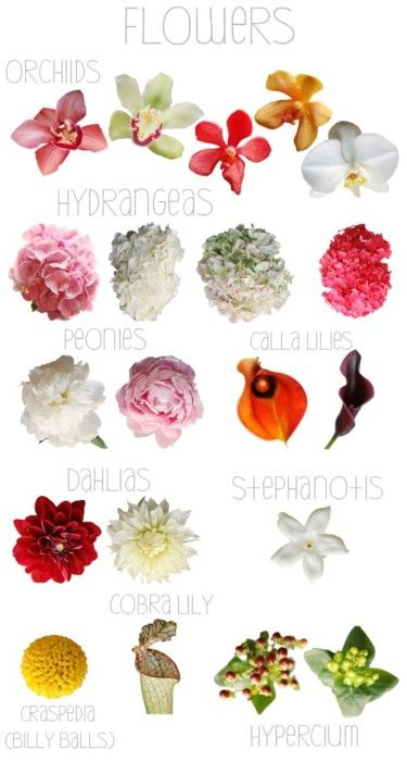 For those of you who want to familiarize yourself with names of flowers that you might be hearing throughout your wedding planning process. These are only some of the many you will be hearing.