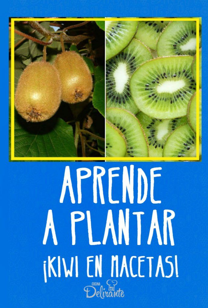Aprende a plantar kiwis en macetas Plantar, Photography Tutorials, Compost, Health Fitness, Herbs, Fruit, Vegetables, Nature, Blog