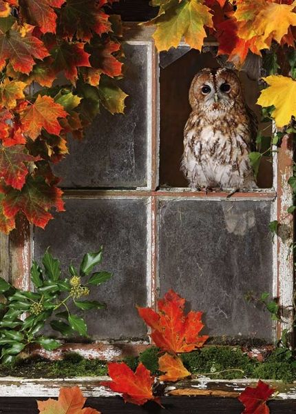 autumn.quenalbertini: Fall Owl, Brian Bevan Photography | Ma- ria Edith