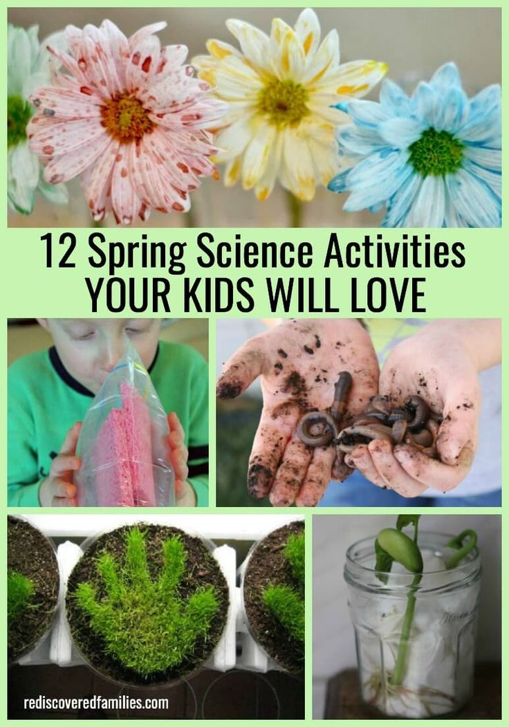 Looking for something fun to do with your children during spring break? I've collected 12 spring science activities that will really impress your kids. Click on the picture to get the juicy details.