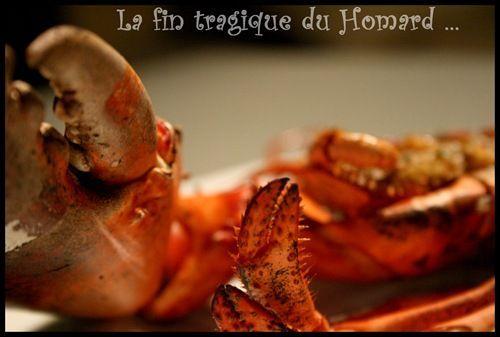 ** La fin tragique d'un Homard: rôti au four , beurre citronné et fenouil confit ... la recette du poissonnier**
