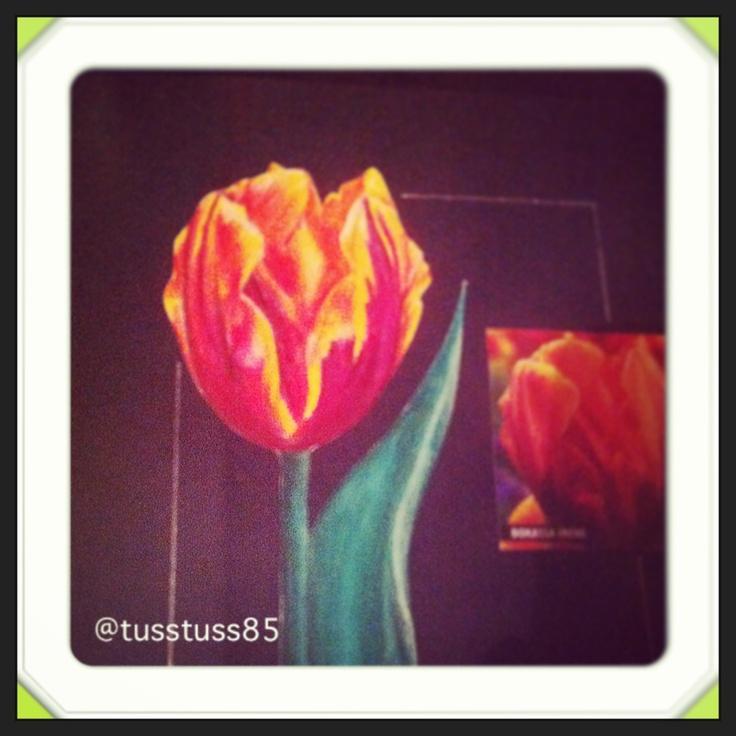 #tulip #art #pencil #sketching #drawing #flowers #floralart