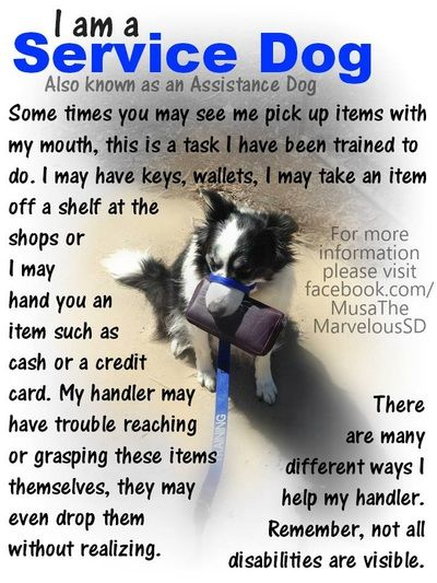 Sometimes You May Not Understand What A Service Dog Can Be