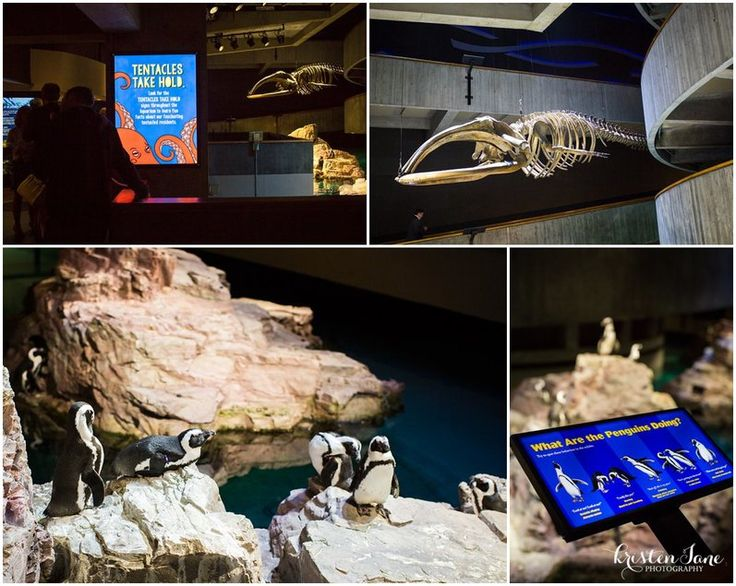 The Penguins Are Always Dressed To Impress At A New England Aquarium Wedding