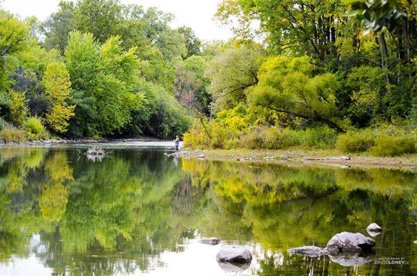Thames River London Ontario  http://davidloney.ca